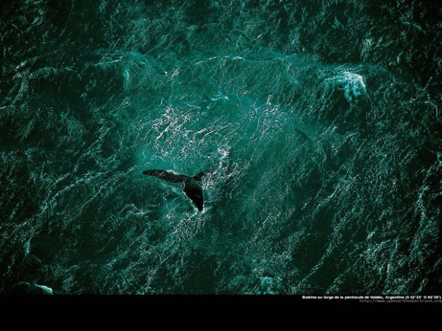 40 Amazing Photos by Yann Arthus Bertrand