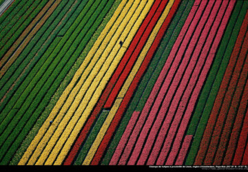 40 Amazing Photos by Yann Arthus-Bertrand - worldwide, top, sea, highest mountain, earth, collection, amazing photos