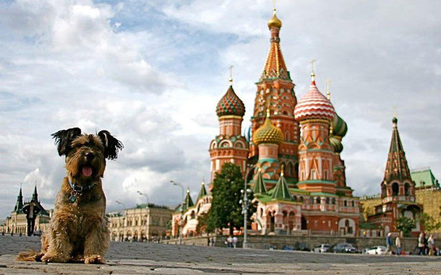 Oscar – The Traveller Dog - world, traveller, travel, Taj Mahal, Oscar, Moscow, london, las vegas, hollywood, eiffel tower, dog, amazing