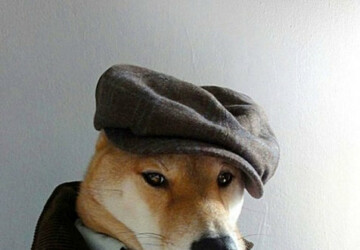 Menswear Dog - top, menswear, fashion, dog, animals, amazing