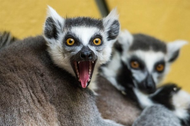 10 Amazing Animal Emotions Photos