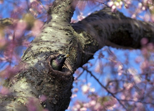 First signs of spring -