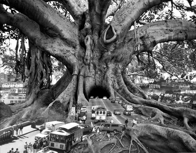 Surreal Art By Thomas Barbey -