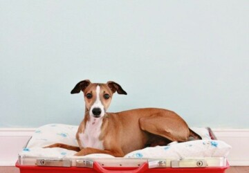 10 DIY Beds For Your Pet -