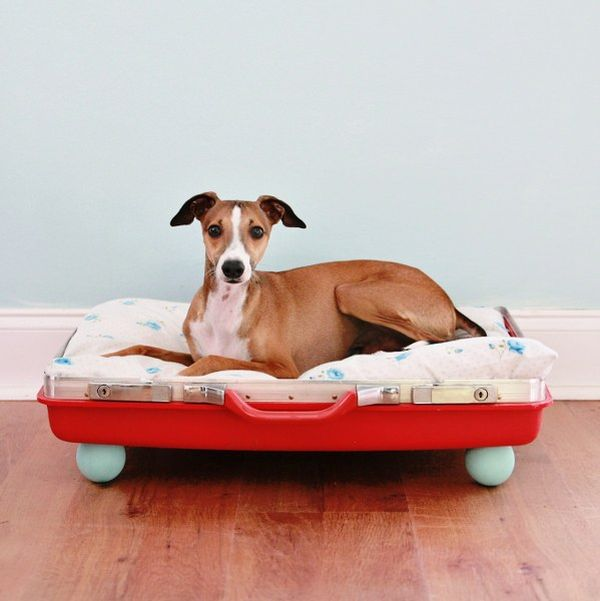 10 DIY Beds For Your Pet