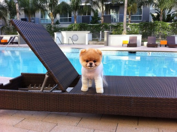 This is Boo – The World's Cutest Dog - Style Motivation