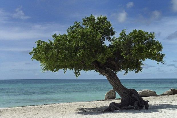 50 Amazing Photos from Aruba