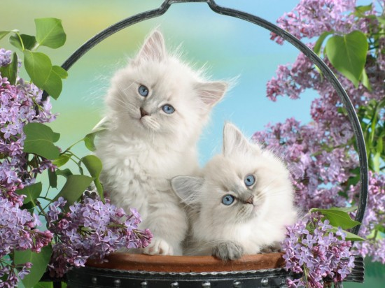 The cutest kittens (10)