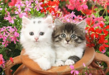26 Cute Adorable Kittens - Kittens, Cute, Adorable