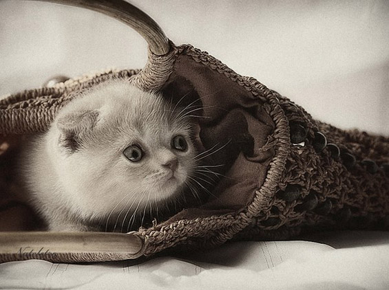 26 Cute Adorable Kittens