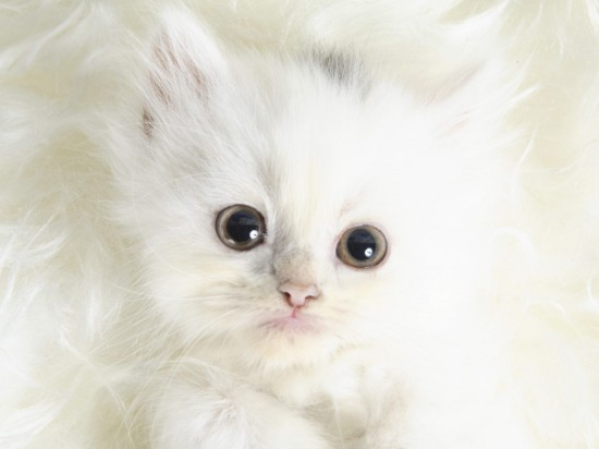 The cutest kittens (2)