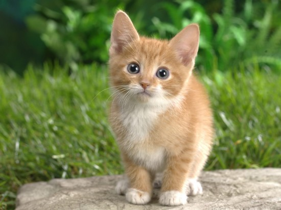 The cutest kittens (24)