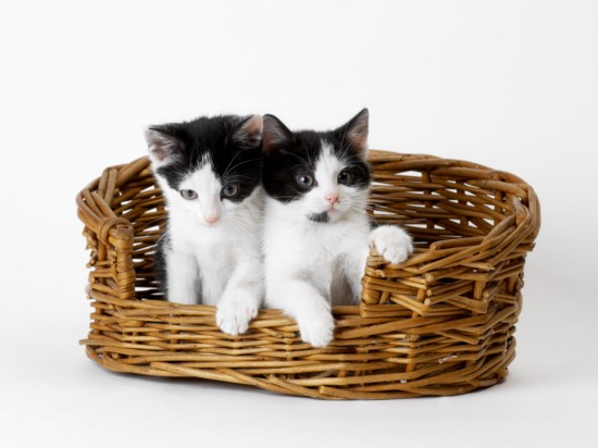 The cutest kittens (4)