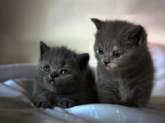 The cutest kittens (9)