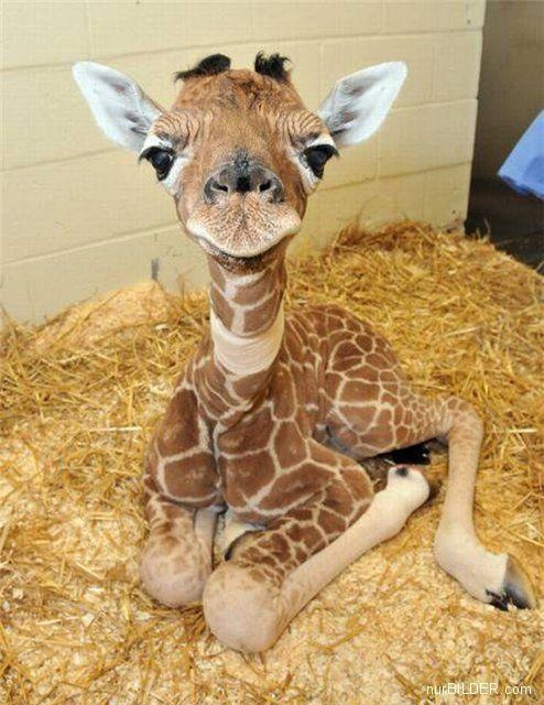 21 Cute Baby Animals