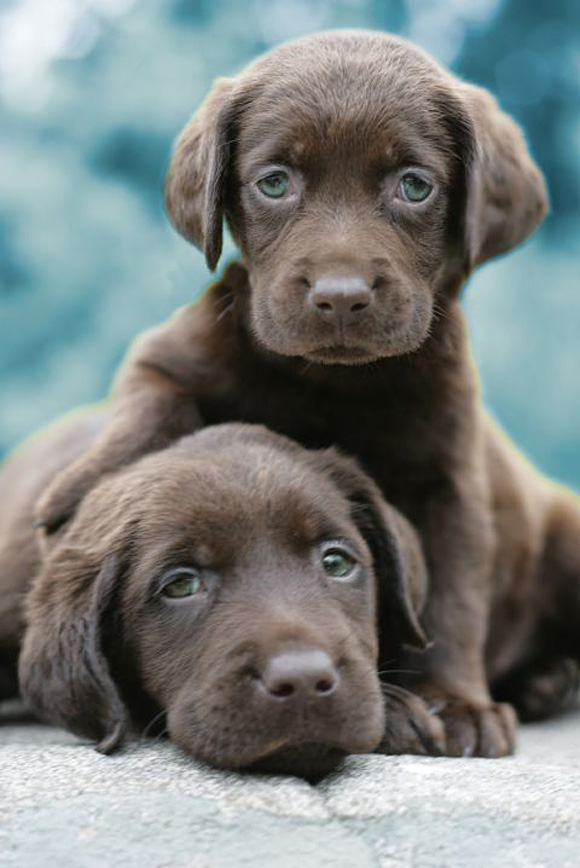 20 Adorable Puppies