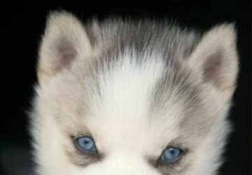 20 Adorable Puppies - small, Puppies, Cute, Adorable