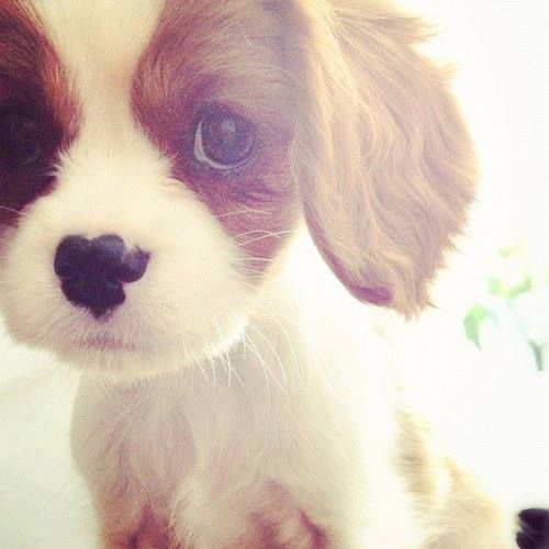 20 Adorable Puppies Style Motivation
