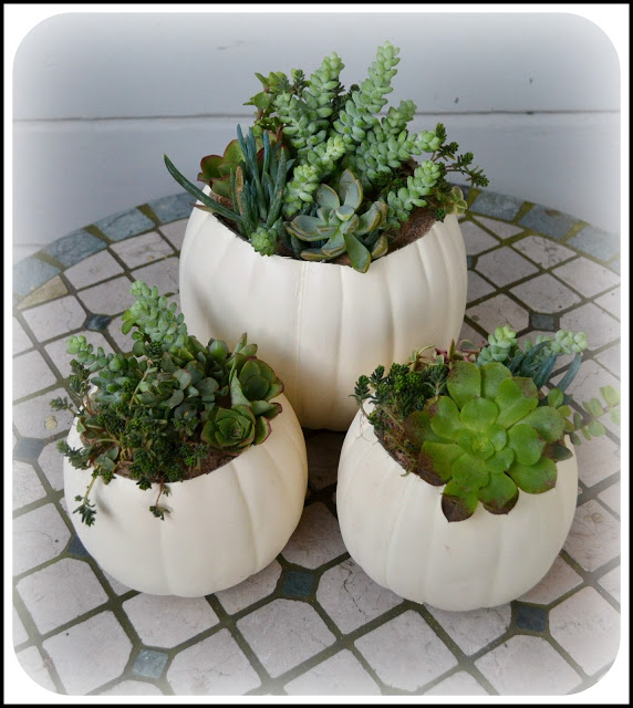 21 Great DIY Succulent Ideas (1)