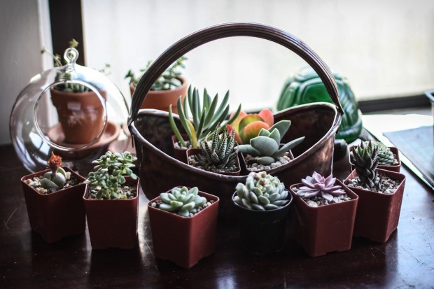21 Great DIY Succulent Ideas (11)