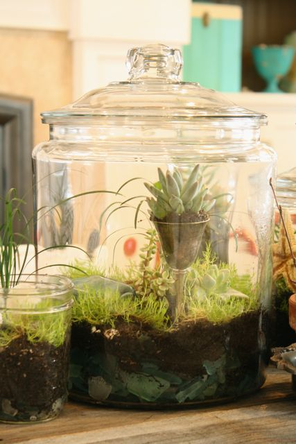 21 Great DIY Succulent Ideas (12)