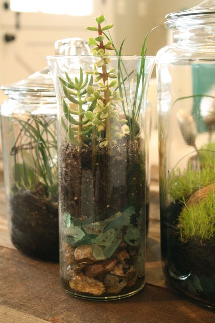21 Great DIY Succulent Ideas (13)