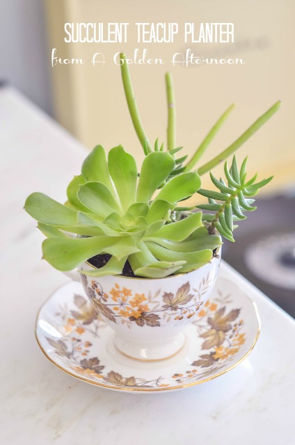 21 Great DIY Succulent Ideas (17)