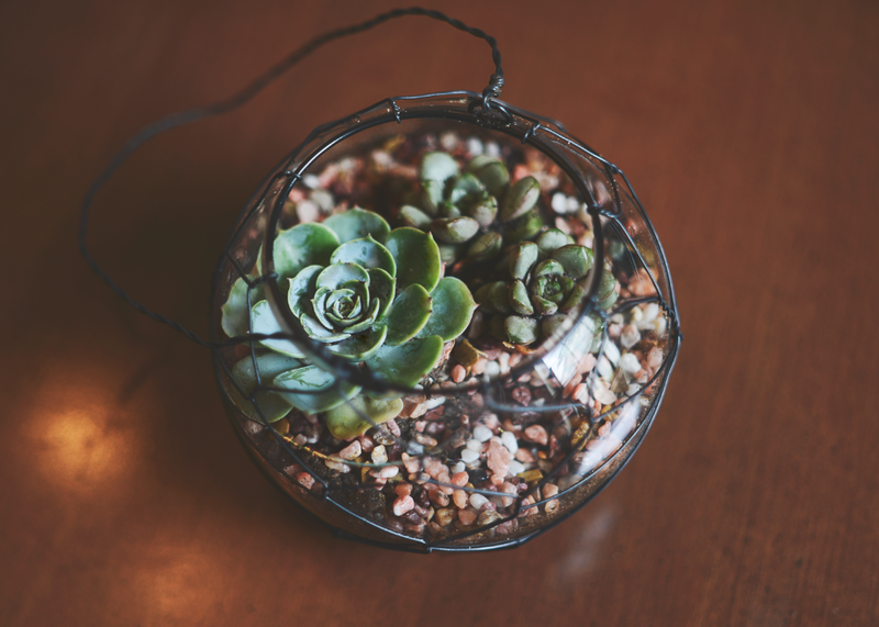 21 Great DIY Succulent Ideas (2)