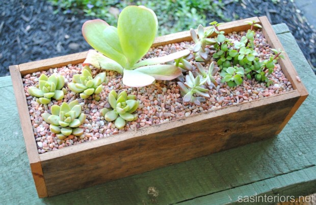 21 Great DIY Succulent Ideas (4)