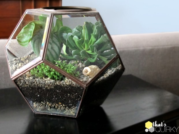 21 Great DIY Succulent Ideas (6)
