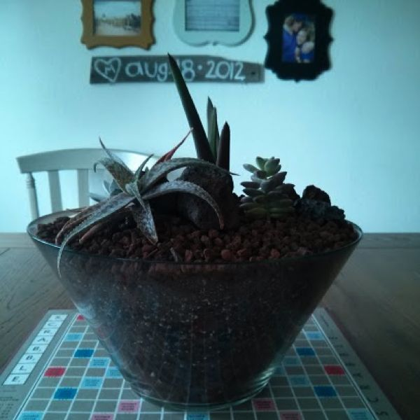 21 Great DIY Succulent Ideas (7)