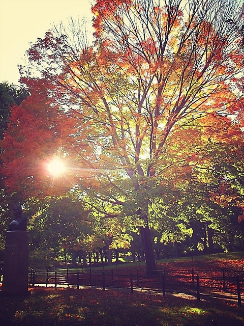 Fall in Central Park, New York (10)