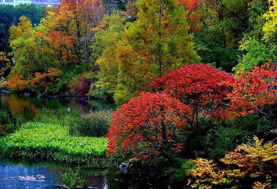 Fall in Central Park, New York (15)