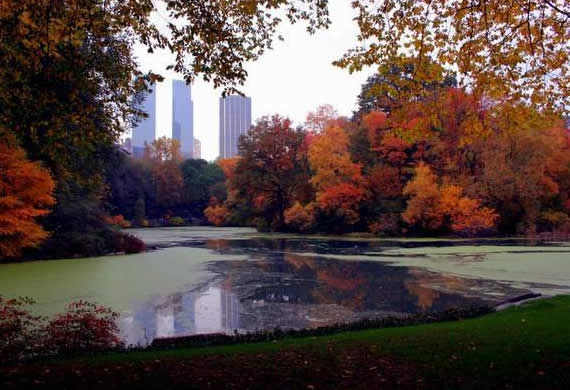 Fall in Central Park, New York (16)