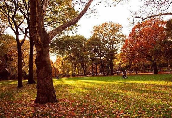 Fall In Central Park New York Style Motivation