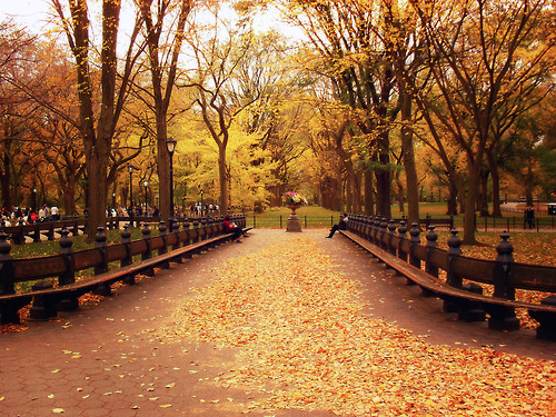 Fall in Central Park, New York (3)