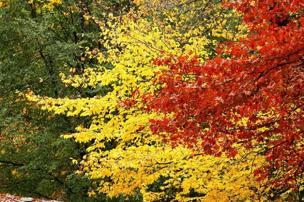 Fall in Central Park, New York (4)