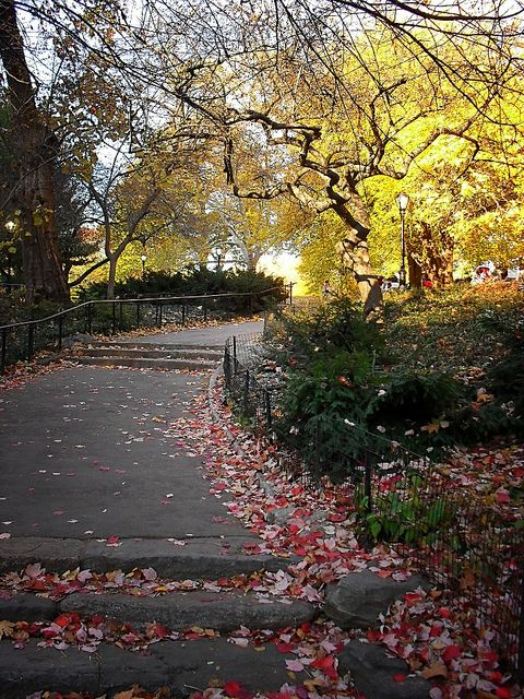 Fall in Central Park, New York