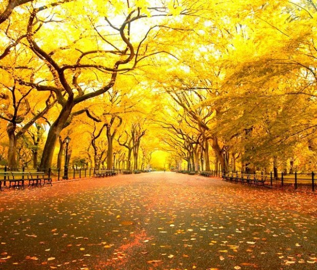 Fall in Central Park, New York (6)