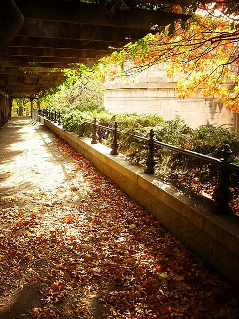 Fall in Central Park, New York (7)