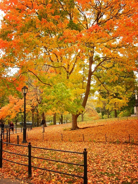 Fall in Central Park, New York (9)