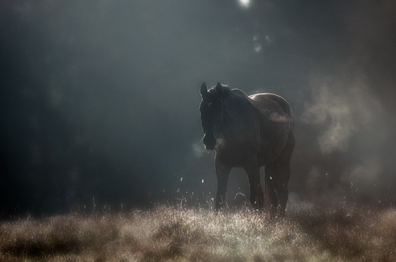 Phenomenal Photography by Photographer Mikko Lagerstedt (1)