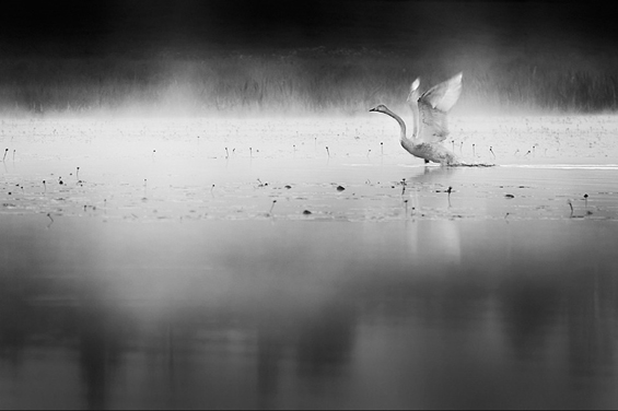 Phenomenal Photography by Photographer Mikko Lagerstedt (17)