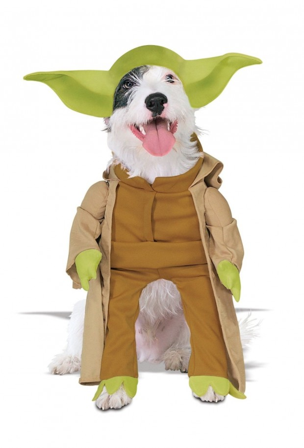 20 Absolutely Amazing Dog Halloween Costumes (11)