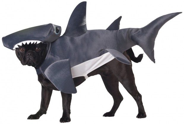 20 Absolutely Amazing Dog Halloween Costumes (13)