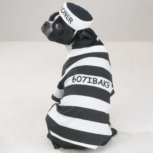 20 Absolutely Amazing Dog Halloween Costumes (14)