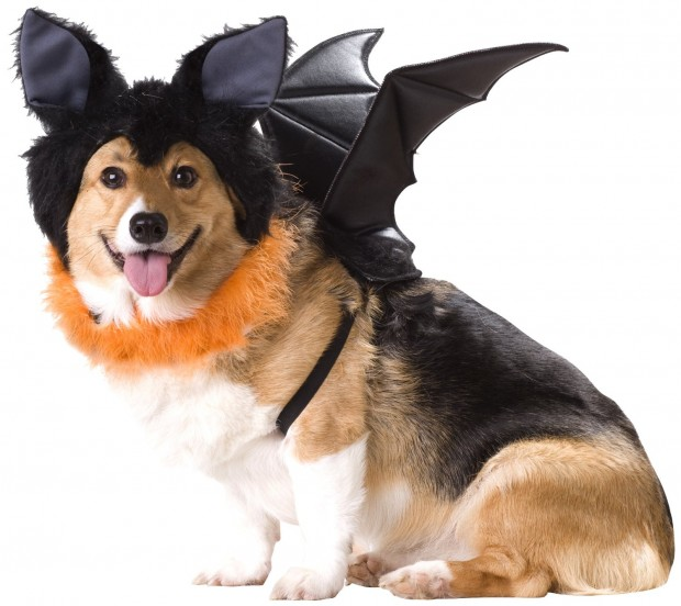 20 Absolutely Amazing Dog Halloween Costumes (15)