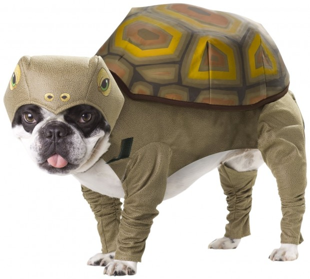 20 Absolutely Amazing Dog Halloween Costumes (17)