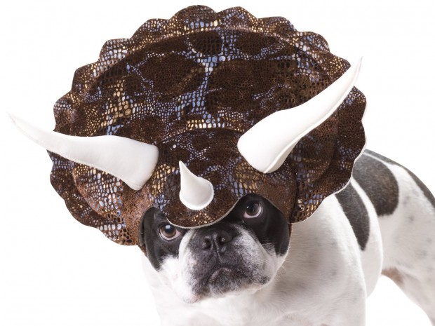 20 Absolutely Amazing Dog Halloween Costumes (2)
