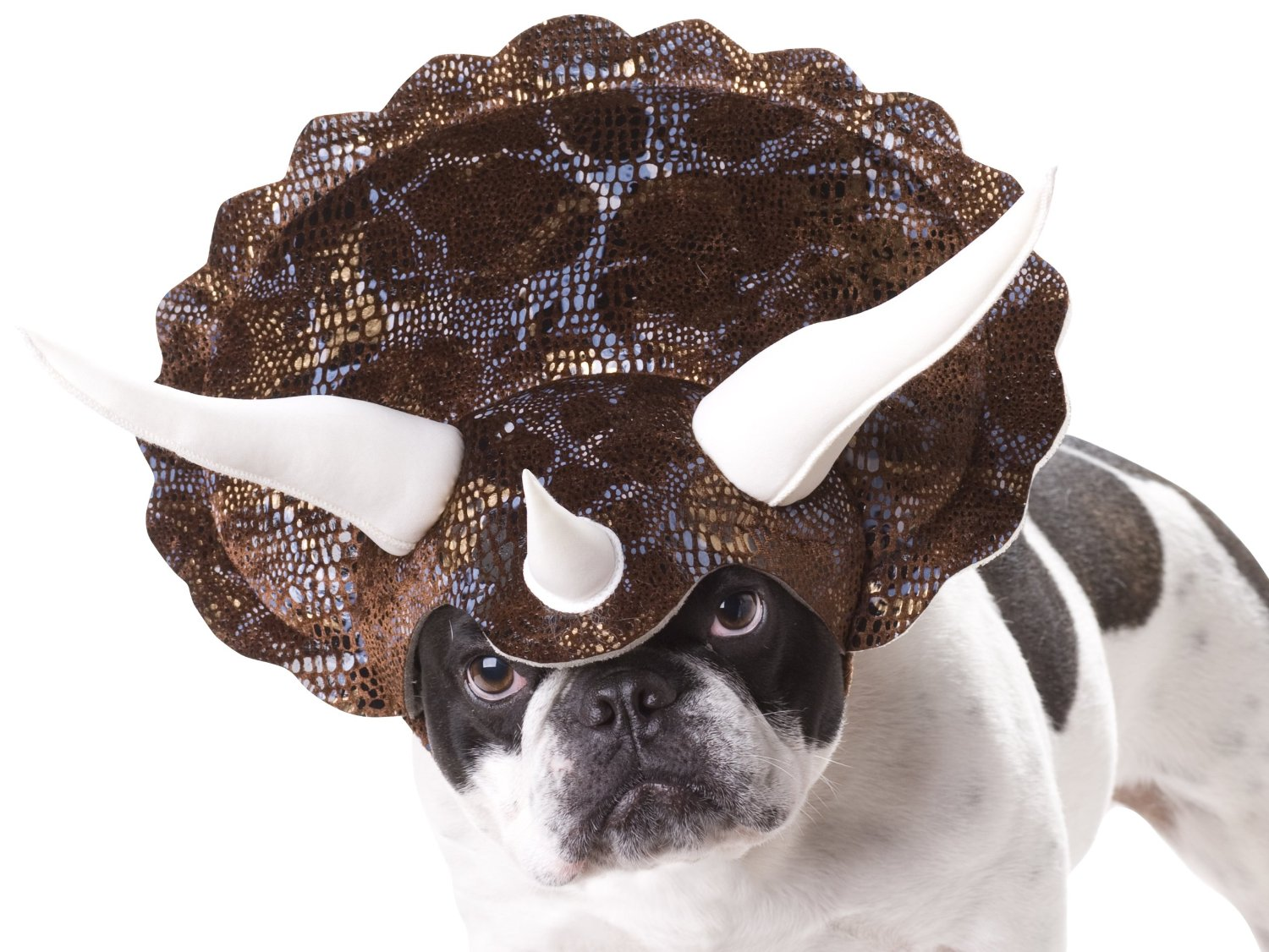 20 Absolutely Amazing Dog Halloween Costumes - Style Motivation